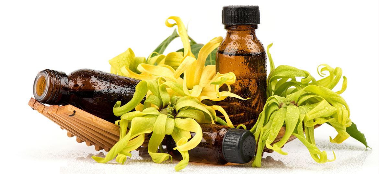 Fragrance 1606 Ylang Ylang